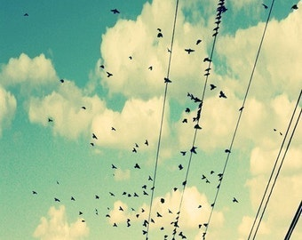 Bird Photograph - Birds on Wire - Incomplete - Original Fine Art Photograph - Nature Photograph - Clouds - Sky - Fly - Summer - Blue