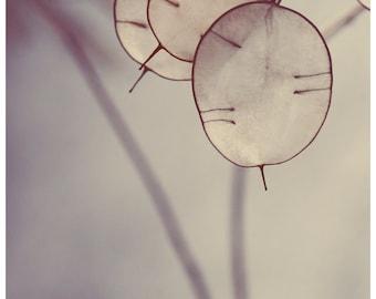 Nature Photograph - Flower Art - Lunaria - There is a Light - Oversized Art - Home Decor - Art Print - Nature Print - Floral Print - Bock