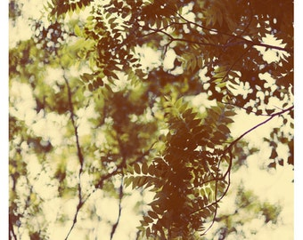 Nature Photograph Tree Photograph - Leaves - Spring - Green - Emerald - Original Fine Art Photograph - Tree Art - Yellow - Peaceful - Bock
