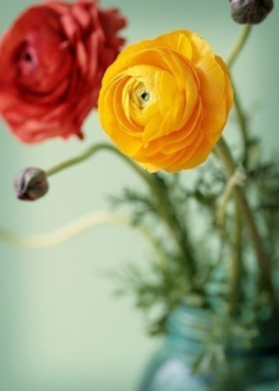 Ranunculus - Original Signed Fine Art Photograph
