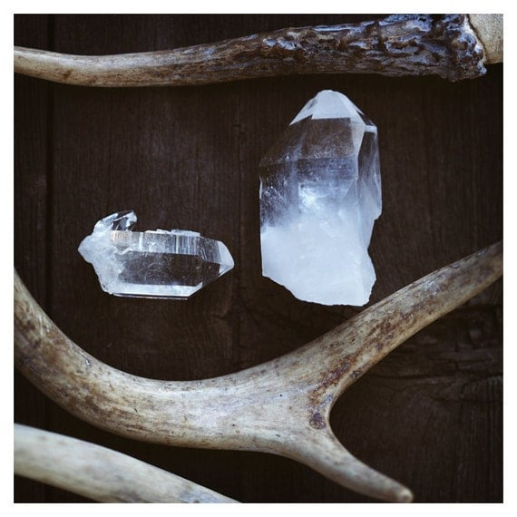 Vintage and Velvet - Antlers - Antler Photograph - Crystal - Quartz - Gem - Deer - Fine Art Photograph - Nature Photography - Autumn