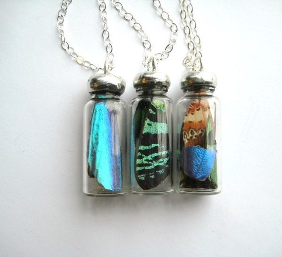 Butterfly Study Necklace- choose your own butterfly wing in a glass bottle