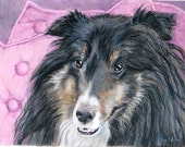 Sheltie Custom Pet Portrait, 5 x 7, Art, Custom Portrait, Pet, Realistic & Full of Personality Dog Art