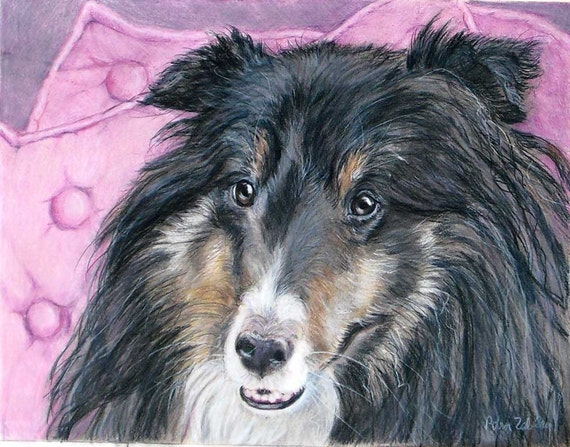 Custom Pet Portrait Drawing in Colored Pencil, Sheltie or any breed