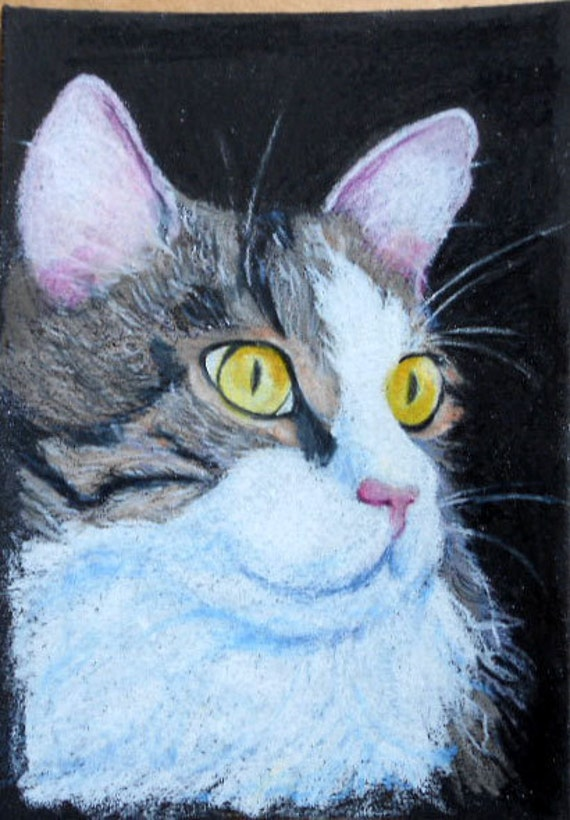 Custom Cat Portrait Drawing in Colored Pencil by Robin Zebley