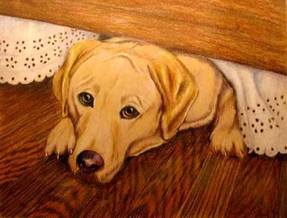 Pet Portrait Drawing, Yellow Labrador Retriver or any Breed, in Colored Pencil