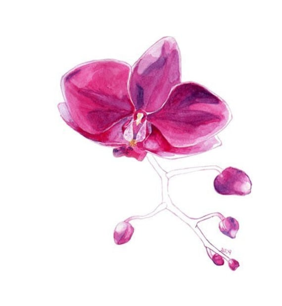 Watercolour Flower Pink Orchid Fine Art Botany Print Gardening Wall Art
