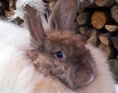 1.5 Oz. Angora Rabbit Fiber for Spinning/Blending/Felting