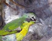 Noisy Green Birds