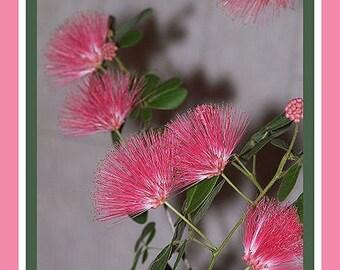 Flowers in bloom -- set of 6