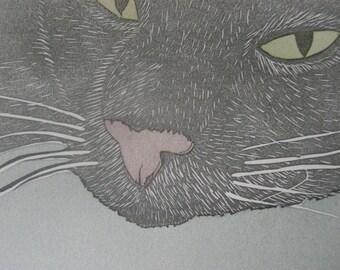 Sydney The Cat postcard