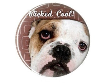 Wicked Cool Bulldog -- Button, Magnet or Key Chain / Bottle Opener
