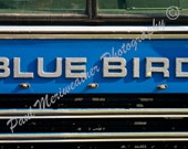 Old Blue Bird Bus (Free Shipping)