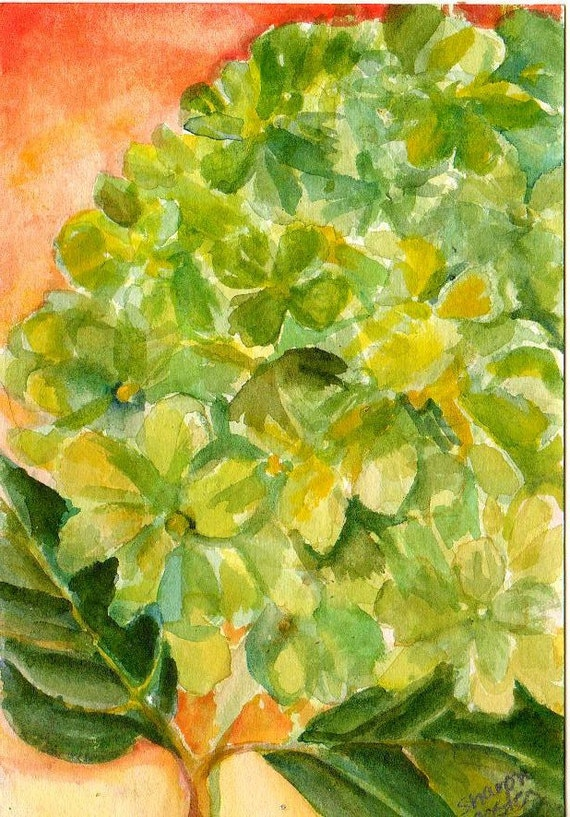 Original 4 by 6 inches Green Hydrangeas original watercolor