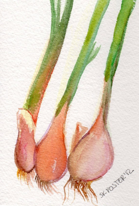 Original watercolor painting, French Shallots, Vegetable Series, 4 x 6