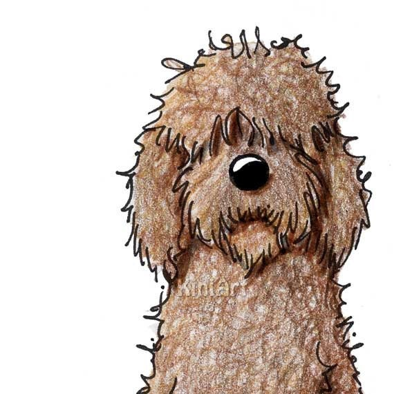 Labradoodle Dog Aceo Original Art Chocolate Goldendoodle