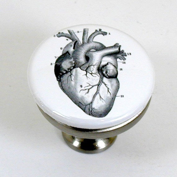 brushed nickel drawer pull with vintage illustration of a human heart