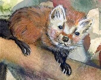Pine Marten art Original weasel watercolor ACEO Painting woodland animal miniature artwork