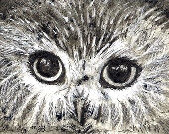 Saw whet Owl Eyes Print