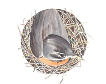 SALE Robin on Nest Original Watercolor Painting by Mary Jill Lemieur