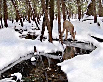 Deer Art woodland scene winter wonderland snow stream doe fawn Minihaha Creek Art Print 8 x 10 inches
