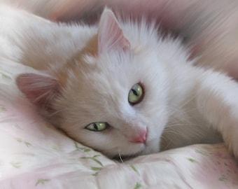 Custom cat portrait, realistic pet art, lifelike, hand painted, digital pet painting, on paper, from your photo, cat art, memorial portrait