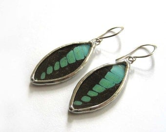 Real Butterfly Earrings: Graphium in Blue and Black