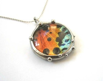 Real Sunset Moth Circle Necklace