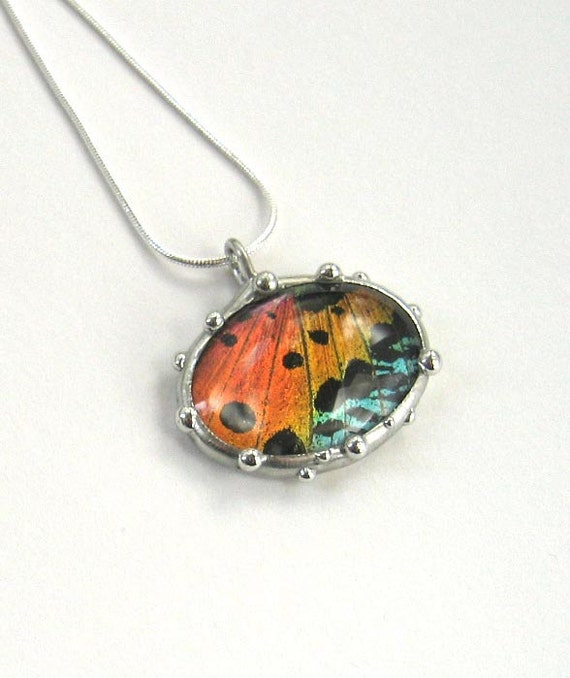 Oval Sunset Moth Necklace - Real Butterfly Jewelry - Nature Art Gifts
