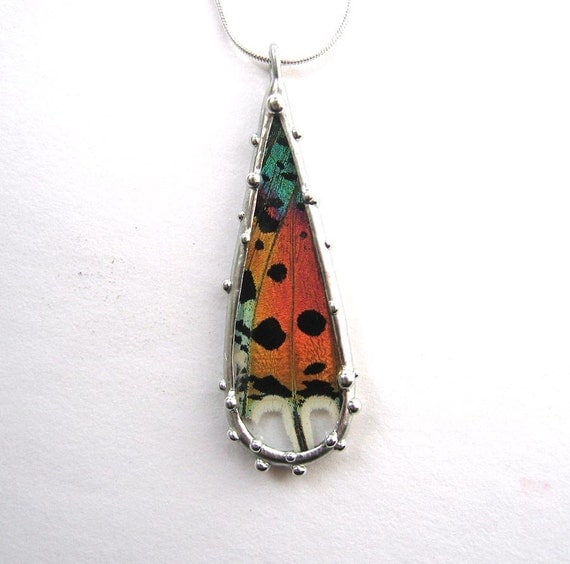 Real Madagascan Sunset Moth Teardrop Necklace