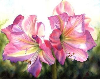 Pink Amaryllis  Watercolor Painting Print