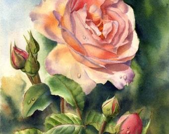 Rose - Print of an Original Watercolor Painting by Doris Joa
