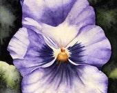 Purple Pansy - Original 5 x 7 Watercolor