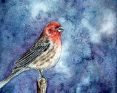 Here Comes the Night - Original Finch Bird Watercolor