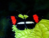 Tattered - Original Butterfly Oil Painting
