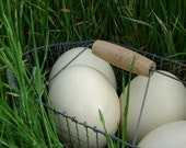 Ostrich Egg, Natural - one giant egg for Easter decorating and crafts