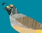 Quail - 8x10 - Bird Art Print