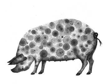 Pig Print 8X10 (ink bubble painting reproduction print) animal art