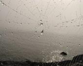 Dew on web, photograph
