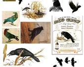 Black Crows and Ravens No. 5 - Digital Collage Sheet -See Storefront for Monthly Coupon Code