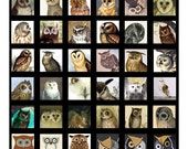 Owls  - 1x1 or .75x.83 Inch Scrabble Images Digital Collage Sheet - See Storefront for Monthly Coupon Code