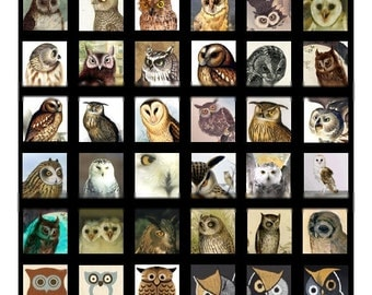 Owls  - 1x1 and .75x.83 Inch - Digital Collage Sheet - Instant Download