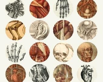 Strange Anatomy - 1.5 Inch Circles - Digital Collage Sheet - Instant Download
