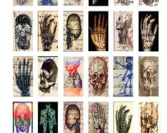 Anatomy No. 1 Domino - 1x2 Inch Images - Altered Art Digital Collage Sheet - Instant Download