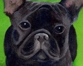 French Bully painting in watercolor      Custom Pet Portraits
