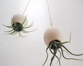 Hanging Air Plant Pod (tm) - natural buff colored stoneware