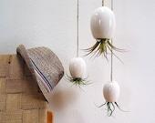Hanging Air Plant Pod Planter (tm) TRIO  - Gorgeous Glossy White