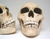 Memento Mori realistic ceramic human skull votive