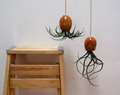 Modern Hanging Ceramic Air Plant Pod (tm) - Contemporary Red Brown Gold