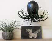 Black Gold Hanging Air Plant Pod (tm) ceramic planter vase